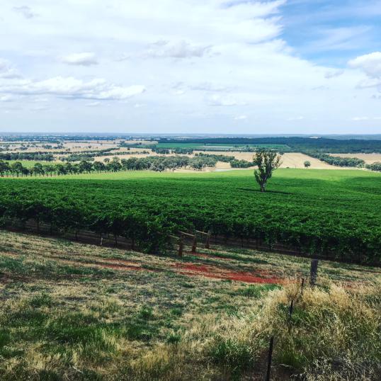 Chinamans Bend Vineyard 2017